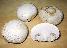 The Agaricus bisporus, one of the most widely cultivated and popular mushrooms in the world