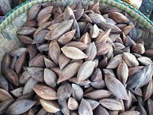 Unshelled pili nuts