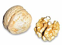 A walnut, left, and its seed, right, having been removed from its pericarp