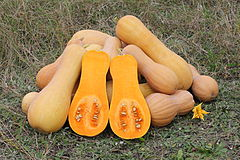 Butternut squash, a variety of winter squash