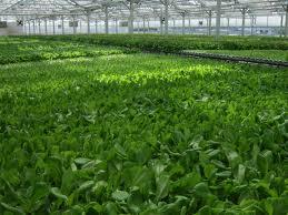 Gotham Greens2