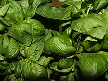 Pesto alla genovese is made from basil leaves..