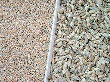 Spelt, without and with husks