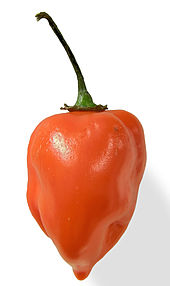The habanero pepper is known for its unique combination of intense flavor, aroma and heat