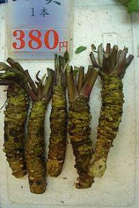 Fresh wasabi stems