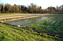 Watercress beds in Warnford, Hampshire.