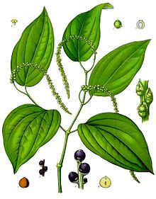Pepper plant with immature peppercorns