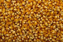 Unpopped corn