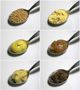 Mustard seeds (top-left) may be ground (top-right) to make different kinds of mustard. The other four mustards pictured are a simple table mustard with turmeric coloring (center left), a Bavarian sweet mustard (center-right), a Dijon mustard (lower-left), and a coarse French mustard made mainly from black mustard seeds (lower-right).